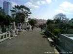 ロードワーク in 青山墓地